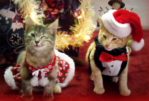Christmas-Cat-58